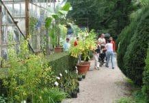 Rasprodaja u Botaničkom vrtu