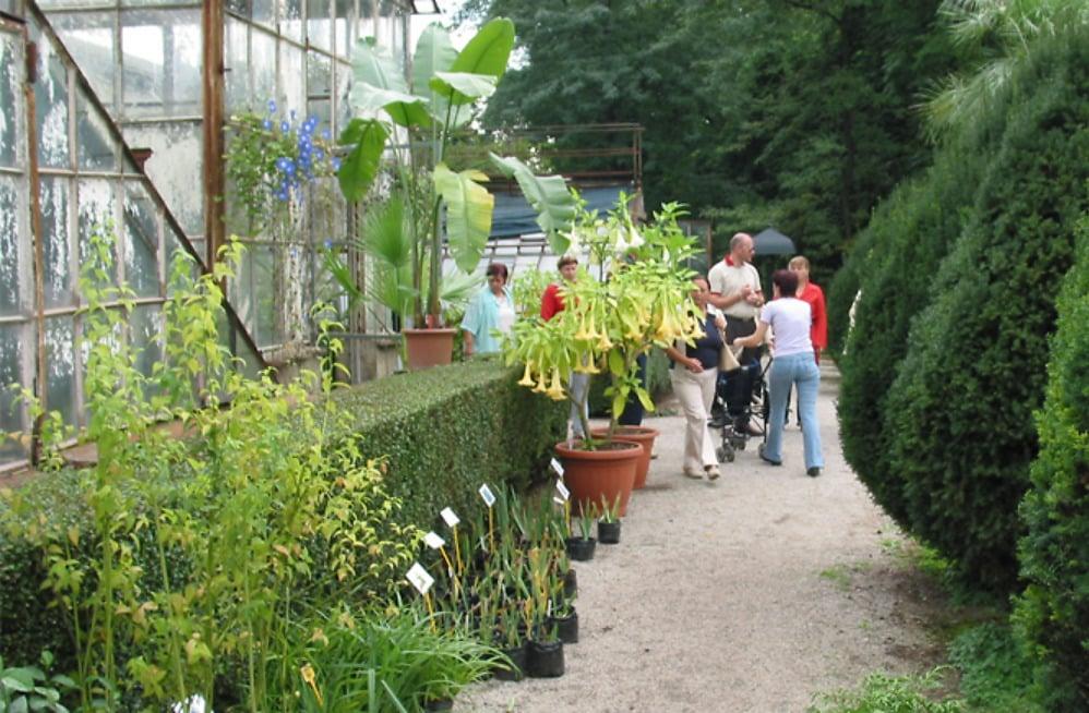 Godišnja rasprodaja viška biljaka | Botanički vrt